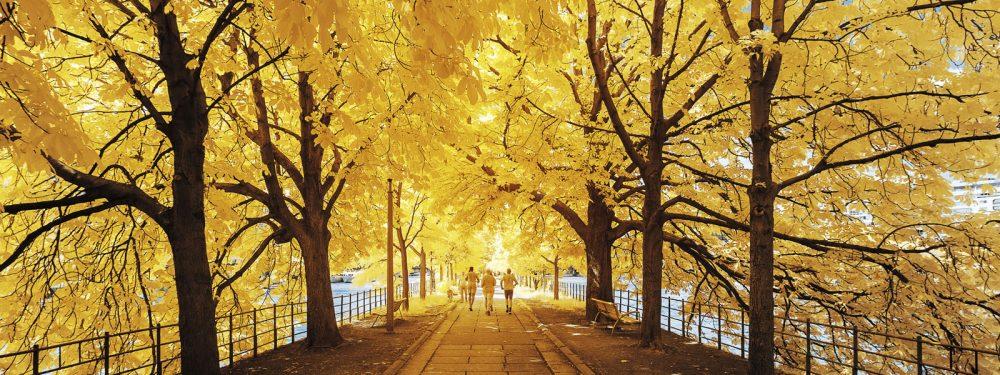 Promenade boisée en infrarouge réalisée à l'aide de l'équipement conçu par Kolari Vision EN.
