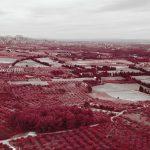 Vue du parc régional des Alpilles depuis les Baux de Provence. Photographie infrarouge en aerochrome réalisée par Pierre-Louis Ferrer.