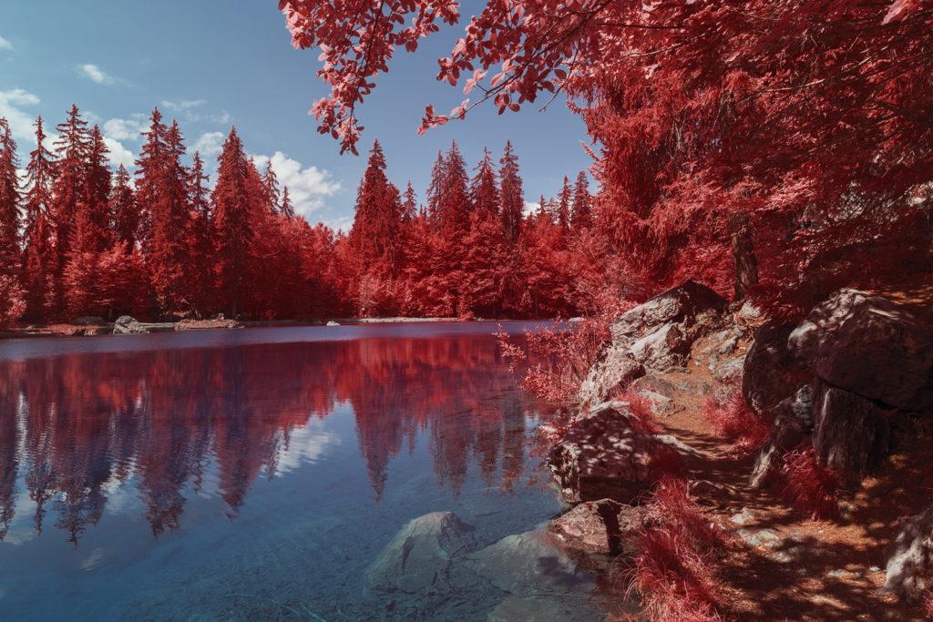 Lac Vert, dans la réserve naturelle de Passy en Savoie. Reflets des sapins et bords du lac en infrarouge, aerochrome numérique. Photograhie de Pierre-Louis Ferrer.