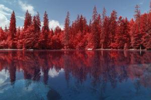 Lac Vert, dans la réserve naturelle de Passy en Savoie. Reflets des sapins en infrarouge, aerochrome numérique. Photograhie de Pierre-Louis Ferrer.