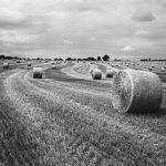 Virage argentique. Photographie argentique réalisée à l'aide du moyen format argentique FUJI GSW690II. Champ breton et rouleaux de paille.