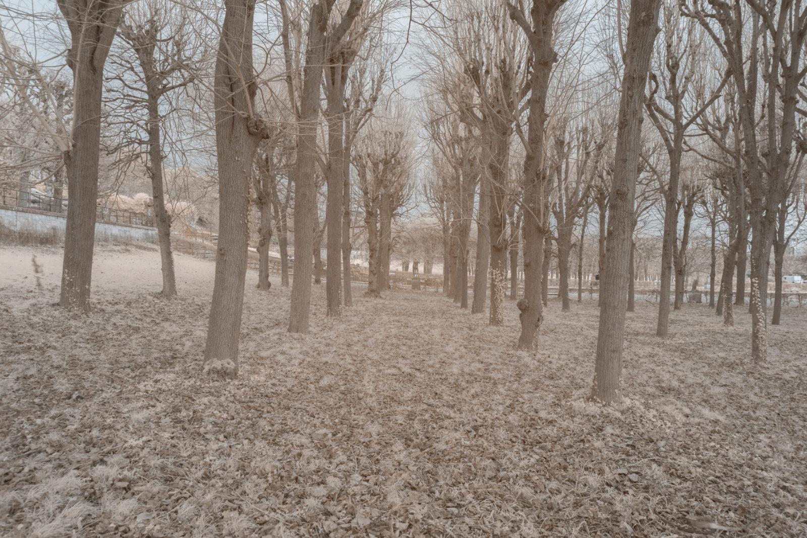 DETAILS 2 24mm F11 CANON | Pierre-Louis Ferrer | Test du SIGMA 24mm F/1.4 DG HSM Art en photographie infrarouge | Partie 1