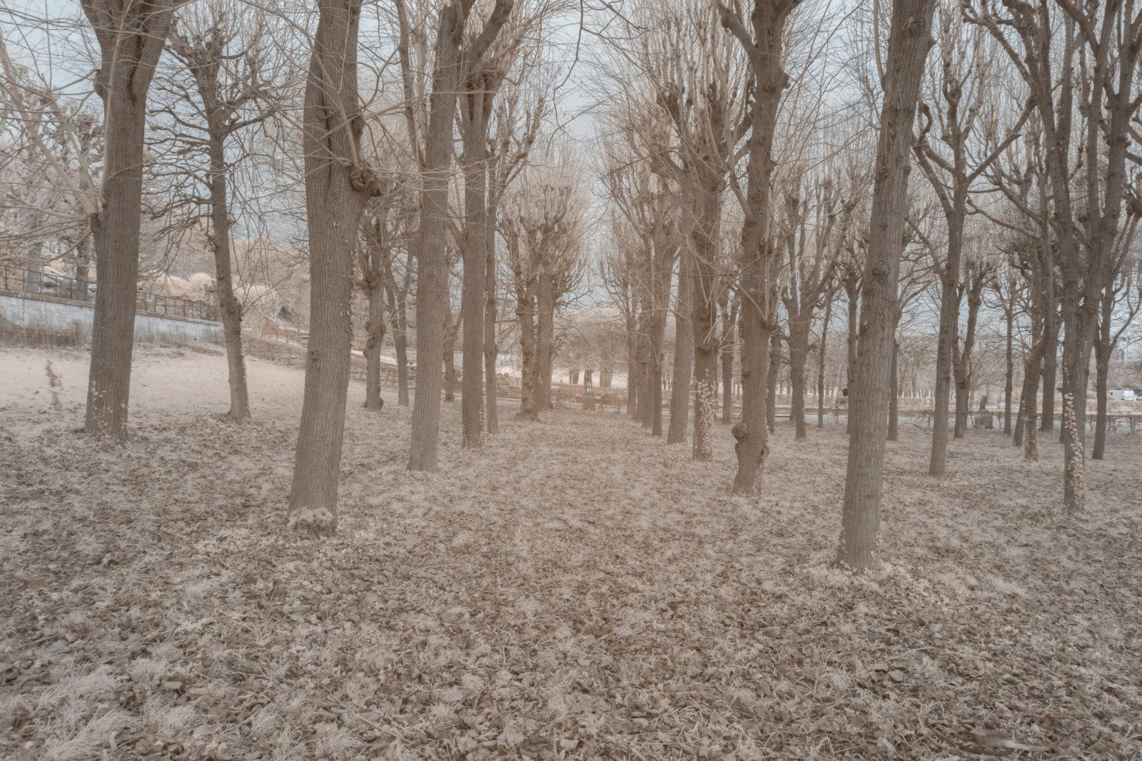 DETAILS 2 24mm F16 CANON | Pierre-Louis Ferrer | Test du SIGMA 24mm F/1.4 DG HSM Art en photographie infrarouge | Partie 1