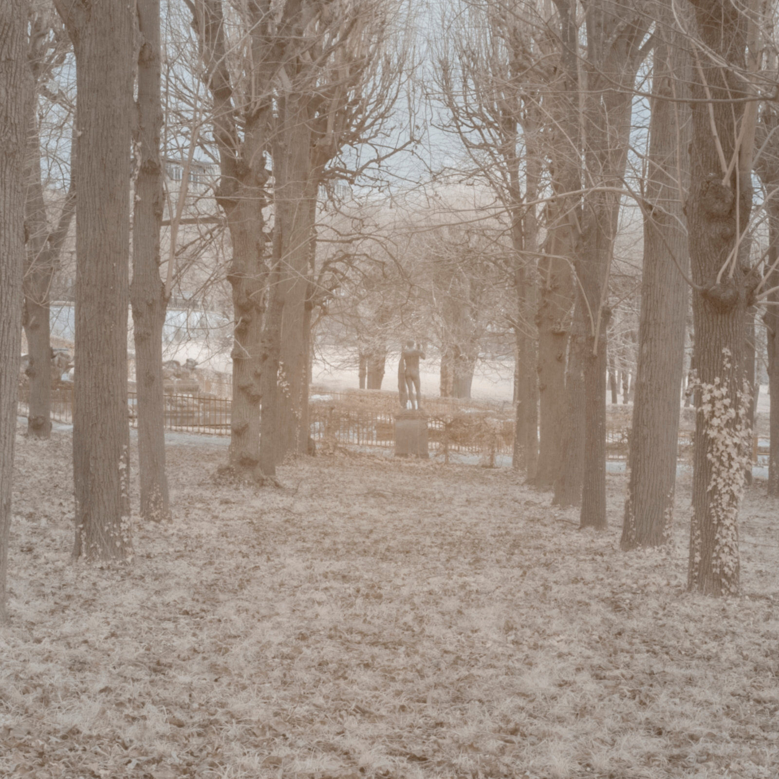 DETAILS 2 24mm F16 SIGMA 1 | Pierre-Louis Ferrer | Test du SIGMA 24mm F/1.4 DG HSM Art en photographie infrarouge | Partie 1