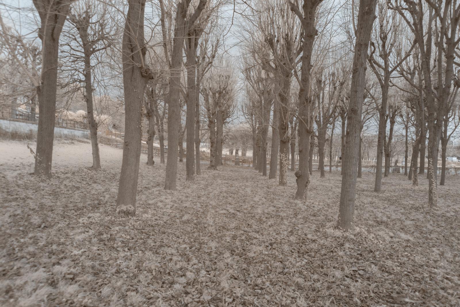 DETAILS 2 24mm F4 CANON | Pierre-Louis Ferrer | Test du SIGMA 24mm F/1.4 DG HSM Art en photographie infrarouge | Partie 1