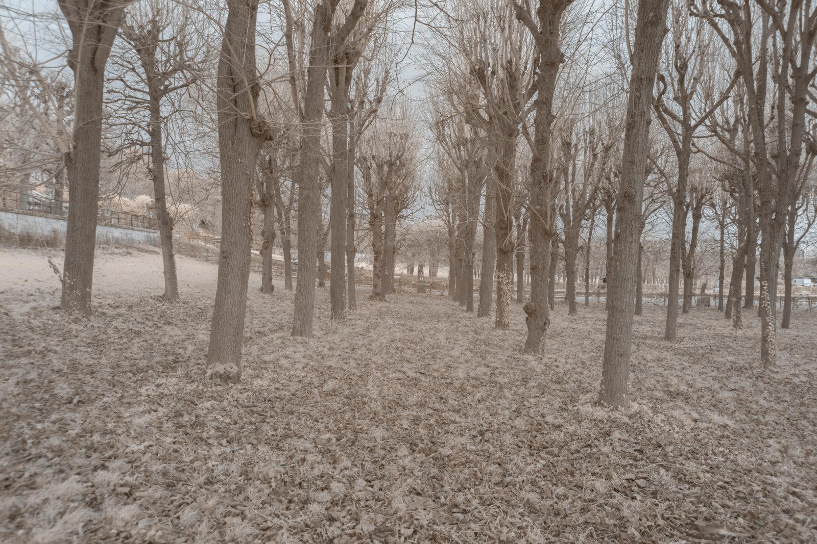 DETAILS 2 24mm F5.6 CANON | Pierre-Louis Ferrer | Test du SIGMA 24mm F/1.4 DG HSM Art en photographie infrarouge | Partie 1