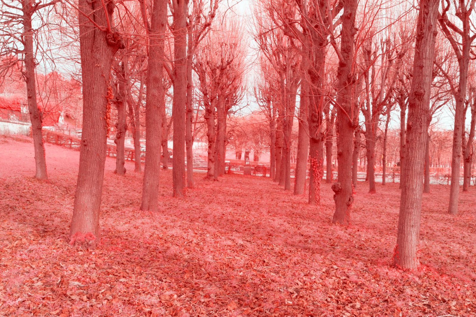 DETAILS 35mm F16 CANON | Pierre-Louis Ferrer | Test du Tamron SP 35 mm f/1.4 Di USD en photographie infrarouge | Partie 2