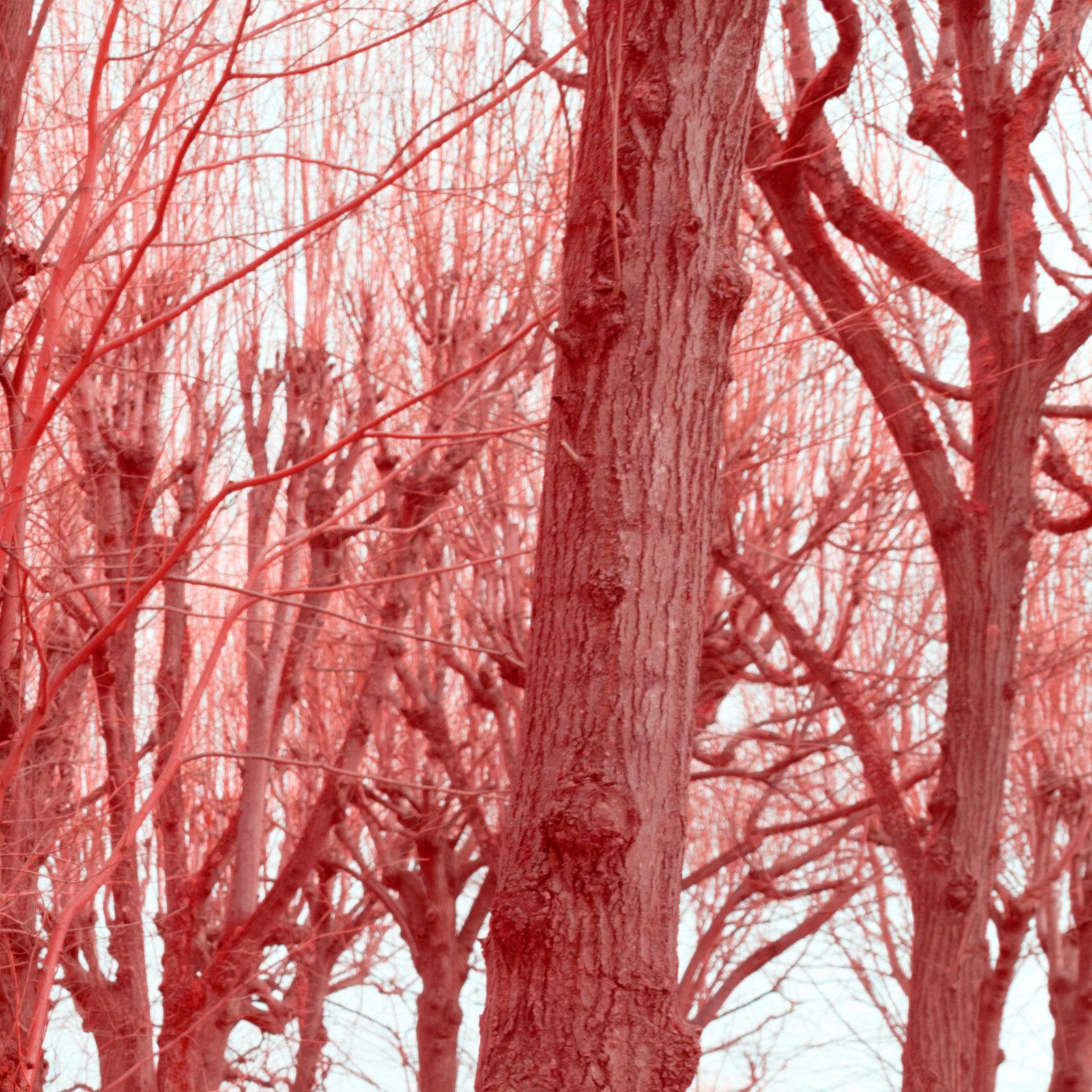DETAILS 35mm F5.6 CANON 2 | Pierre-Louis Ferrer | Test du Tamron SP 35 mm f/1.4 Di USD en photographie infrarouge | Partie 2