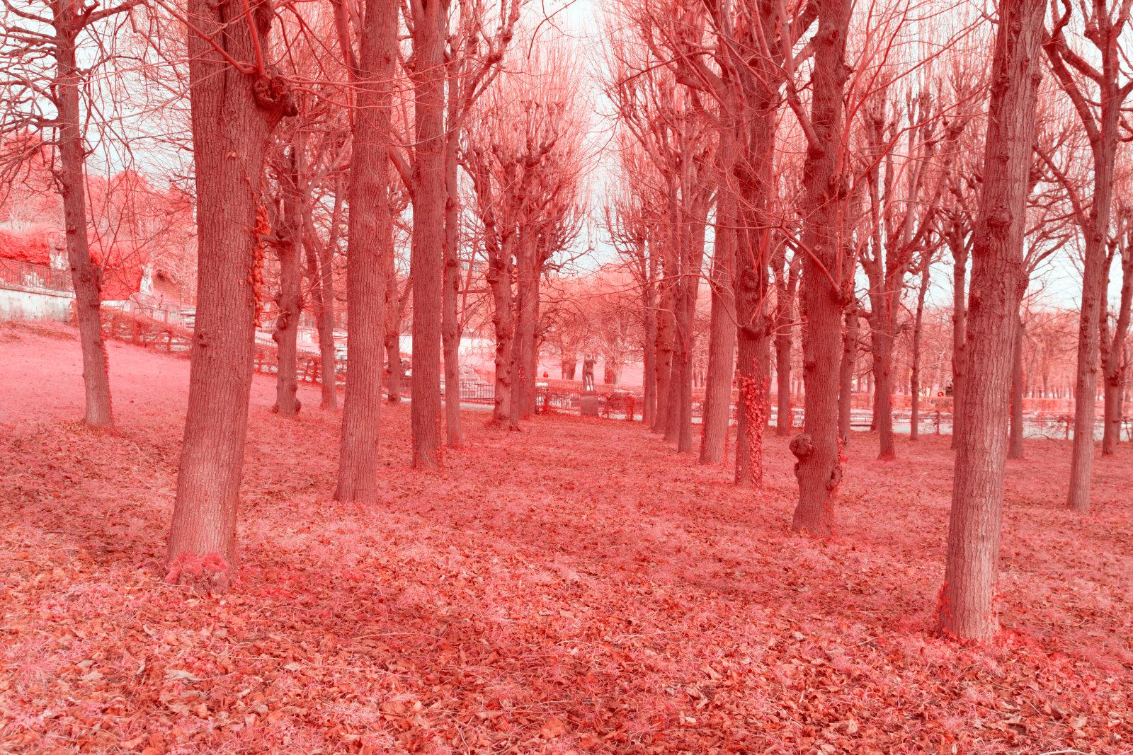DETAILS 35mm F8 CANON | Pierre-Louis Ferrer | Test du Tamron SP 35 mm f/1.4 Di USD en photographie infrarouge | Partie 2