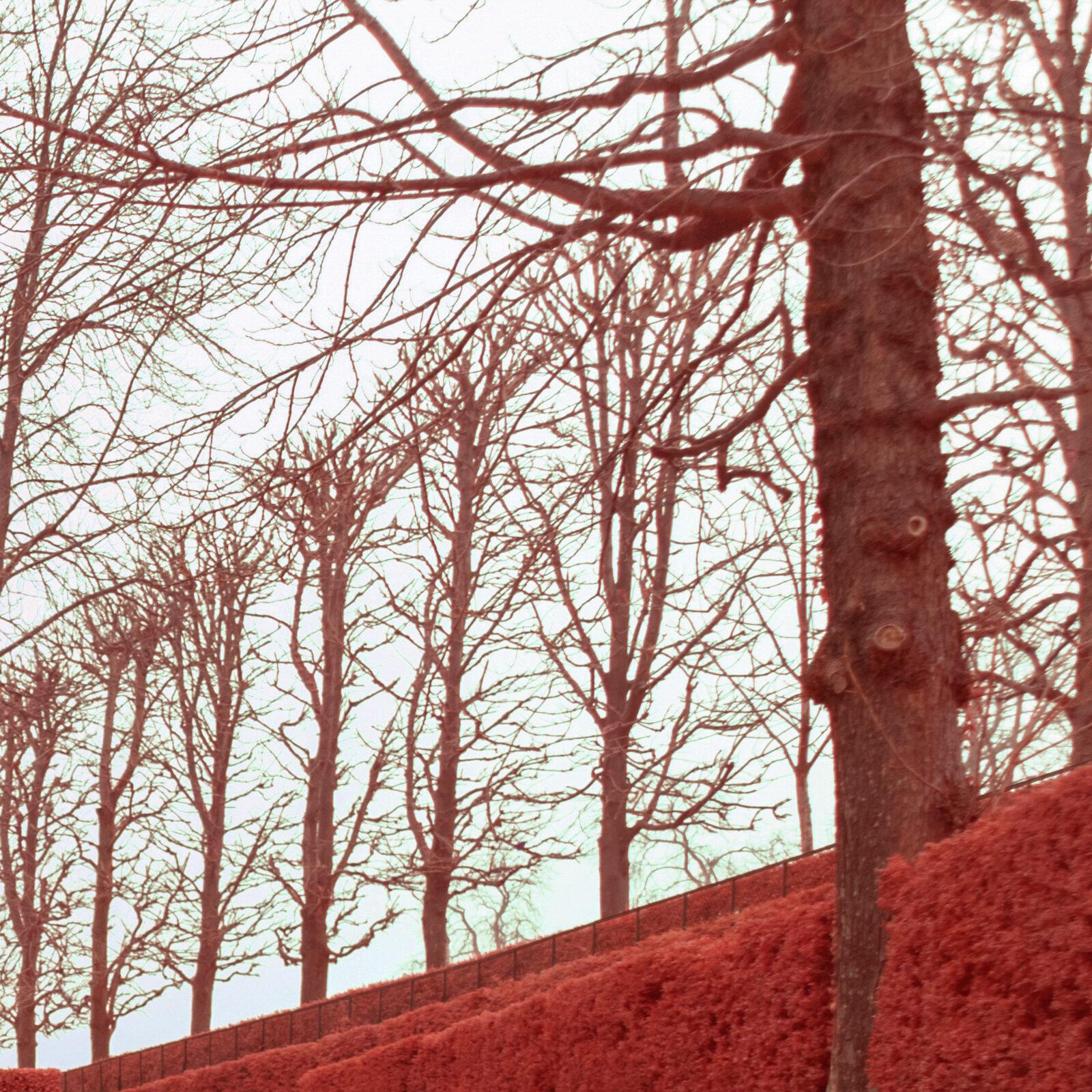 Canon 16 35 F4 L IS details global 500nm infrarouge 24mm details 1 | Pierre-Louis Ferrer | Test du Tamron SP 15-30mm f2.8 Di VC USD en photographie infrarouge | Partie 2