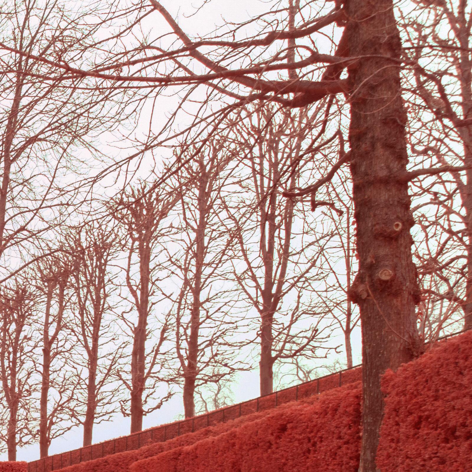 Canon 16 35 F4 L IS details global 500nm infrarouge 24mm details 5 | Pierre-Louis Ferrer | Test du Tamron SP 15-30mm f2.8 Di VC USD en photographie infrarouge | Partie 2