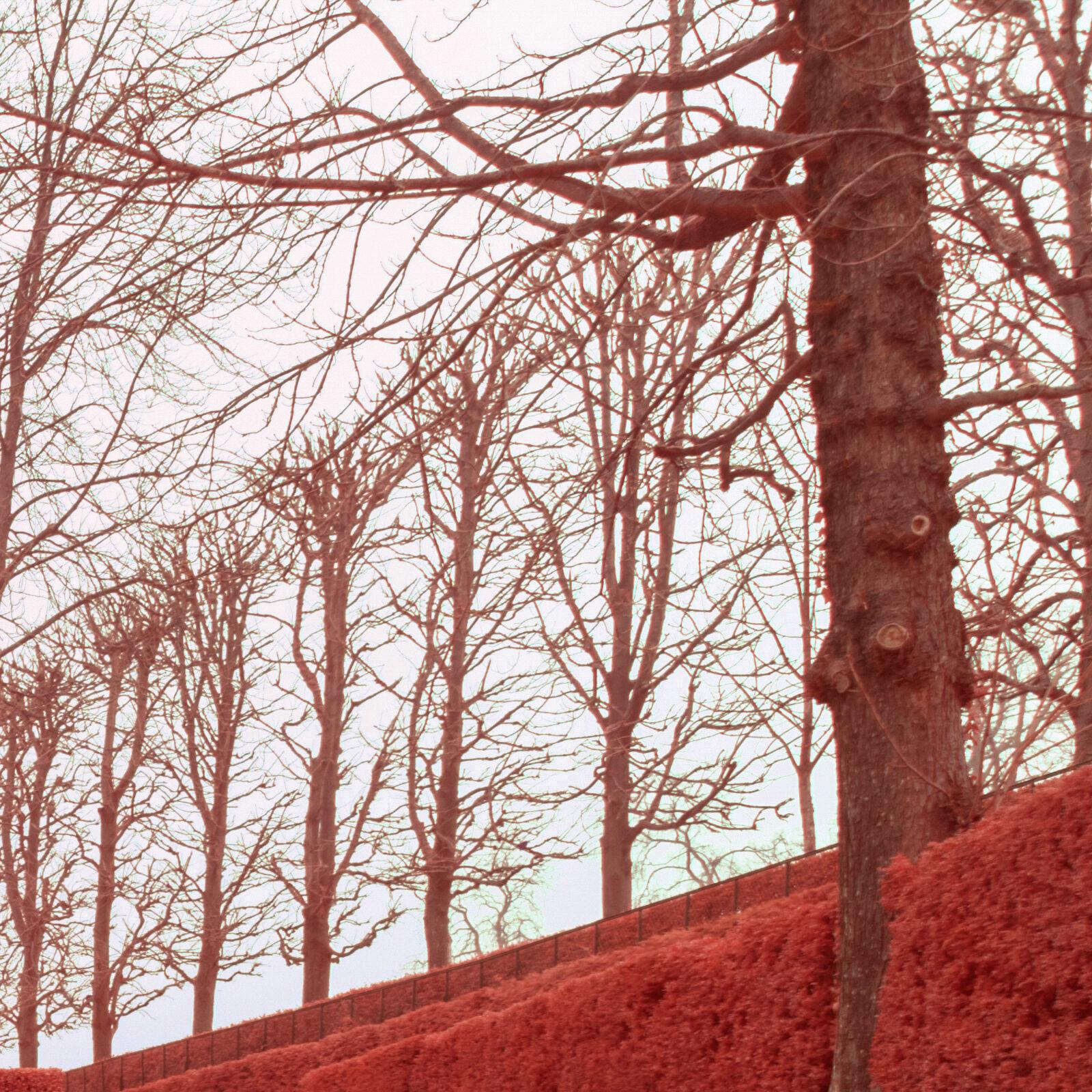 Canon 16 35 F4 L IS details global 500nm infrarouge 24mm details 7 | Pierre-Louis Ferrer | Test du Tamron SP 15-30mm f2.8 Di VC USD en photographie infrarouge | Partie 2