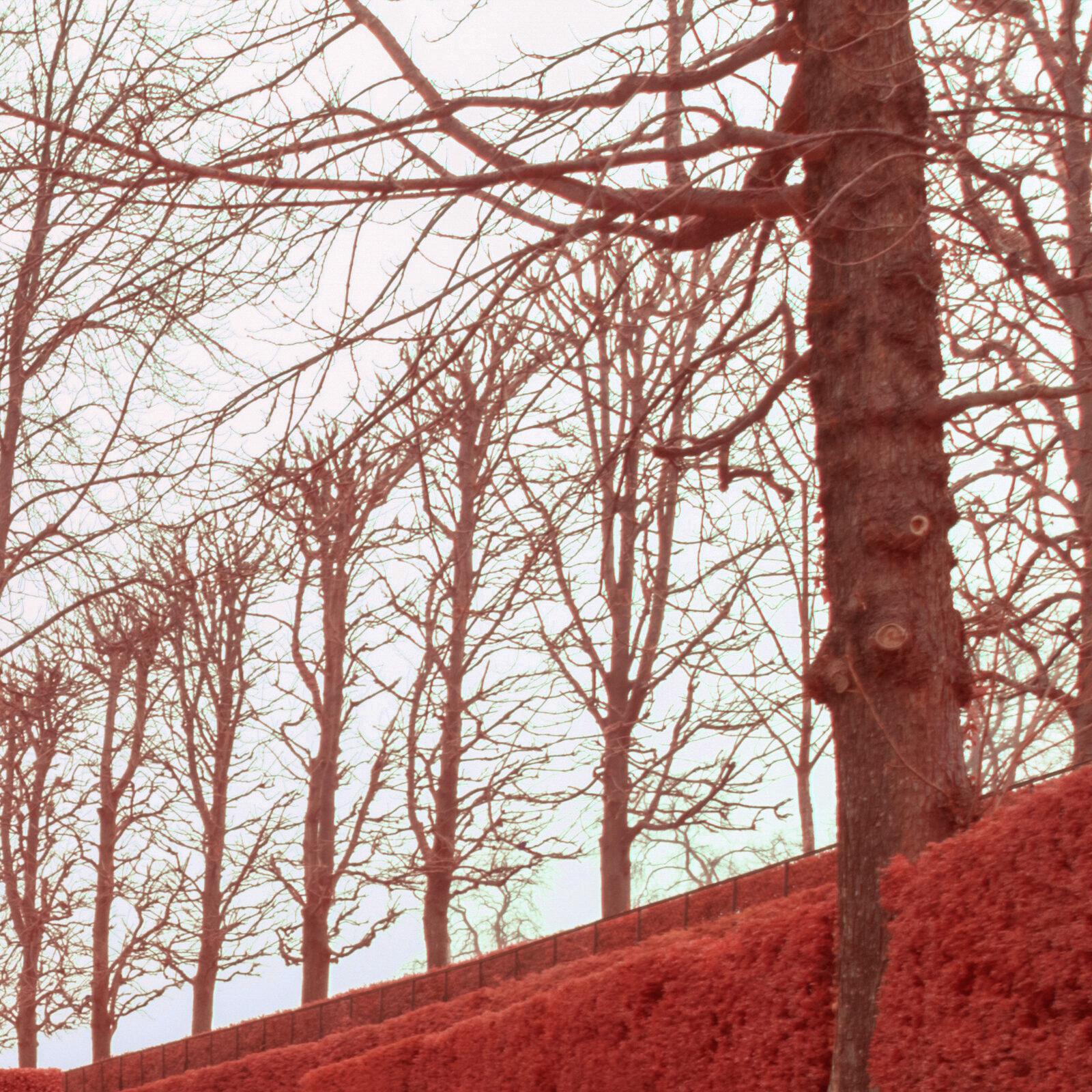 Canon 16 35 F4 L IS details global 500nm infrarouge 24mm details 9 | Pierre-Louis Ferrer | Test du Tamron SP 15-30mm f2.8 Di VC USD en photographie infrarouge | Partie 2
