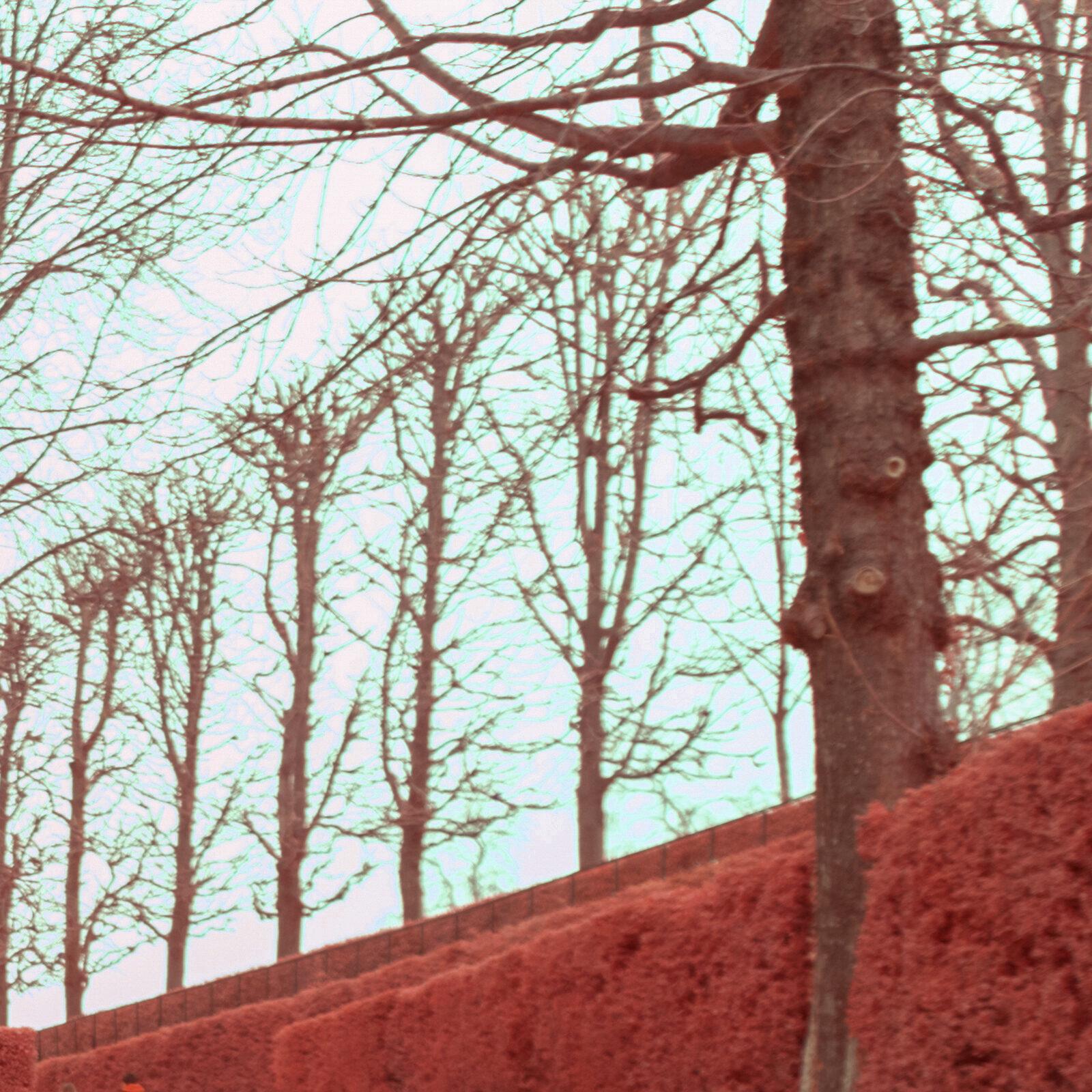 test Tamron SP 15 30 mm f4 Di VC USD details 500nm 24mm 2 | Pierre-Louis Ferrer | Test du Tamron SP 15-30mm f2.8 Di VC USD en photographie infrarouge | Partie 2