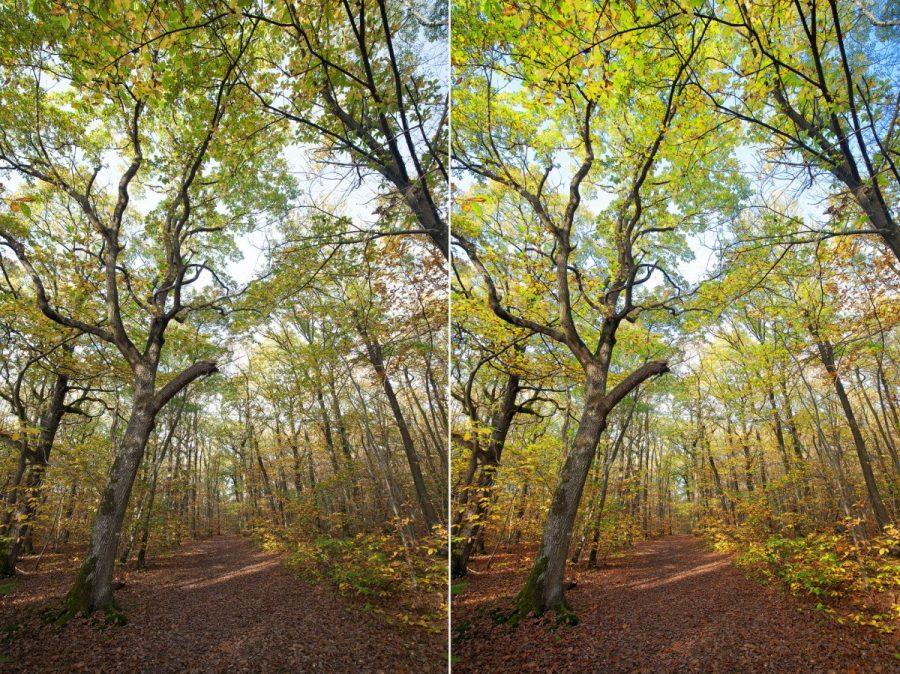 Avant/après photo de forêt
