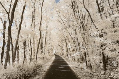 Chemin boisé de campagne en Bretagne. Photographie infrarouge réalisée par le photographe Pierre-Louis Ferrer, spécialiste en photographie dans l'ultraviolet et l'infrarouge.
