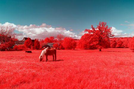 les-vaches-bretonnes-voient-rouge (3)